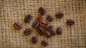 Brown wiruje tło piec kawowe fasole zbiory wideo
