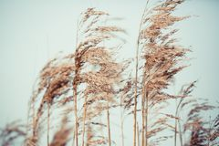 Brown Withered Plant during Daytime Stock Image