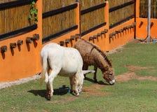 Brown witka lub koń zdjęcia stock