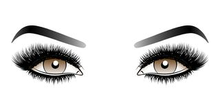 Brown woman eyes with long false lashes with eyebrows. royalty free stock photography