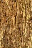 Brown wood bark texture Royalty Free Stock Image