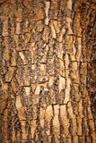 Brown wood bark Royalty Free Stock Image