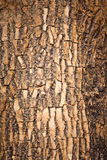 Brown wood bark Royalty Free Stock Photography