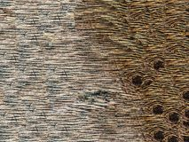 Brown wood pattern texture Royalty Free Stock Images