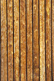 Brown wood Texture. Brown wood picture for background royalty free stock image