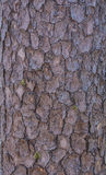 Brown wood texture. Abstract background Royalty Free Stock Images