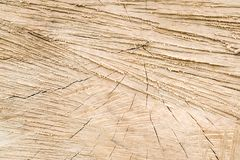 Brown wood texture with some smooth lines in it. Cross section t. Exture of tree stump. Wood rings background. Cracked wooden cut close up stock image