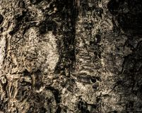 Brown Wood tree trunk with tree bark for texture background Royalty Free Stock Image