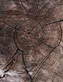 Brown wooden background Stock Photos