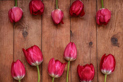 Brown wooden background with red tulips Royalty Free Stock Photography