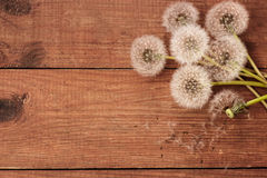 Brown wooden background with white dandelions. Wooden background with white dandelions Royalty Free Stock Image
