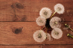 Brown wooden background with white dandelions. Wooden background with white dandelions Royalty Free Stock Images