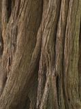 The brown wooden bark texture background. stock images