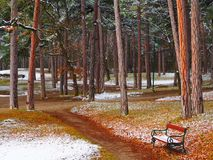 Brown Wooden Bench With Black Metal Frame on Pathway Beside Trees Stock Photos