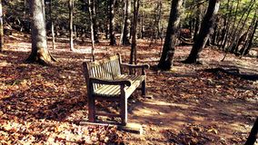 Brown Wooden Bench in the Middle of Forest Royalty Free Stock Photo