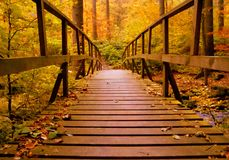 Brown Wooden Bridge In The Forest Royalty Free Stock Photo