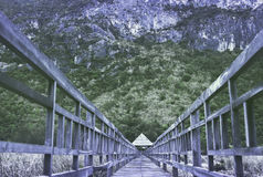 Brown Wooden Bridge in Front of Green Forest during Daylight Royalty Free Stock Image