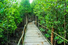 Brown Wooden Bridge Beside Green Leafy Trees Royalty Free Stock Photography