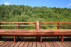 Brown wooden bridge in green mangrove and blue sky nature outdoo. R landscape background Stock Images