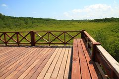 Brown wooden bridge in green mangrove nature outdoor landscape b. Ackground Royalty Free Stock Images