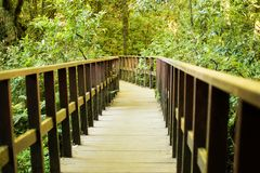 A brown wooden bridge in the middle of the forest. And green mos Stock Photo