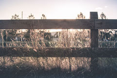 Brown Wooden Fence on Brown Grass Royalty Free Stock Photography
