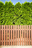 Brown wooden fence and thujas hedge Royalty Free Stock Images