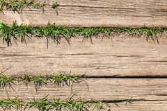 Brown wooden floor with green grass Royalty Free Stock Images