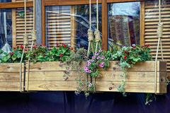 Wooden boxes with flowers hang on ropes on the background of windows Stock Image