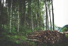 Brown Wooden Log Stock Image