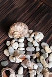 Scattering of shells and pebbles stock image