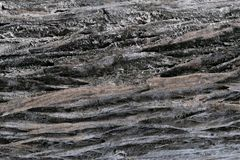 Brown wooden surface texture of tree trunk. stock photography