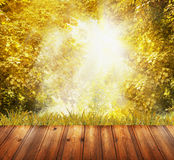 Brown wooden terrace overlooking yellow autumn leaves and sunlight Royalty Free Stock Photos