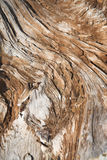 Brown wooden texture abstract Royalty Free Stock Photography