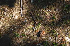 Brown  woodland texture  nature pattern small pine cone ground Stock Photography