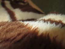 Brown wool blanket close up. Photo of brown wool wrinkled blanket close up royalty free stock images