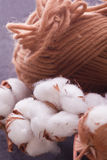 Brown  wool with cotton plant Royalty Free Stock Photography