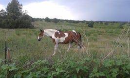 Brown y caballo blanco foto de archivo
