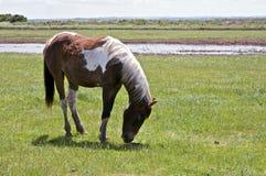 Brown y caballo blanco en un campo Foto de archivo