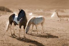 Brown y caballos blancos de la pintura Imagenes de archivo