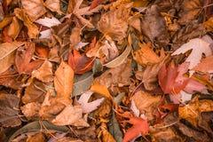 Brown y fondo anaranjado de hojas de otoño Foto de archivo libre de regalías