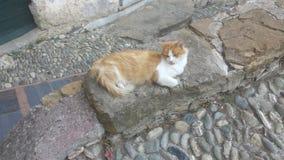 Brown y gato blanco Imágenes de archivo libres de regalías