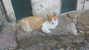 Brown y gato blanco Foto de archivo
