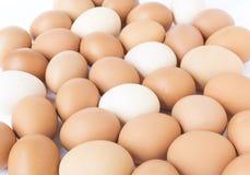 Brown y huevos blancos del pollo Imágenes de archivo libres de regalías