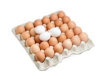 Brown y los huevos blancos en la cartulina egg la bandeja Imagen de archivo