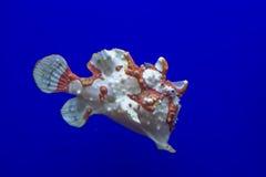 Brown y pescados blancos de la rana imagen de archivo libre de regalías