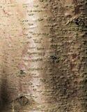 Brown y textura roja de la corteza de árbol Imágenes de archivo libres de regalías
