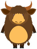 Brown yak with happy face Royalty Free Stock Images