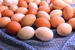 Brown yard eggs, wet Stock Photo