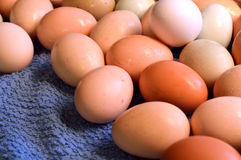 Brown yard eggs, wet Royalty Free Stock Photography